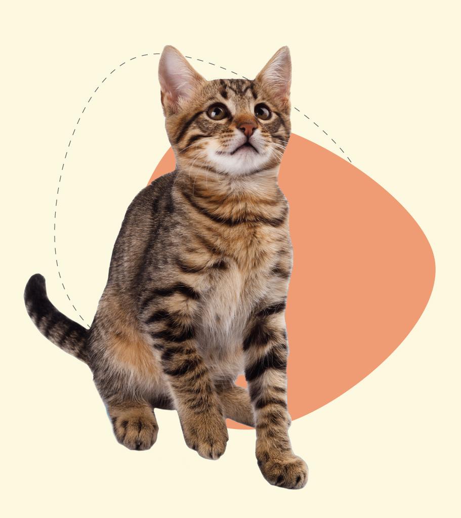 Cat-Boarding-Indoors-Mobile