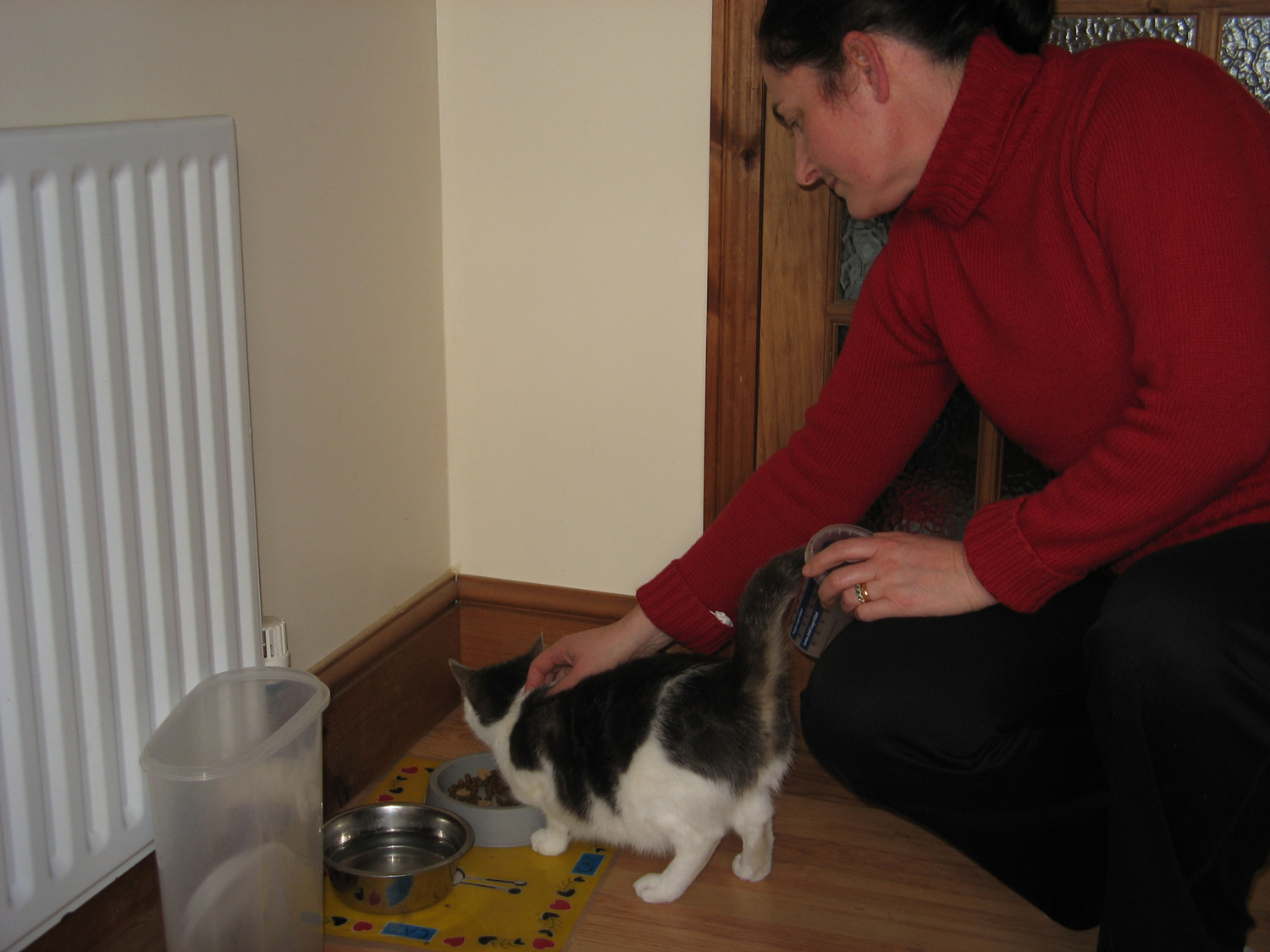 Looking After Cat