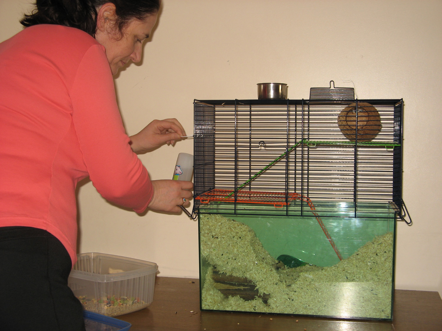 Looking after Small Animals
